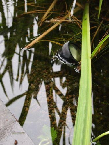 Lavamulch im Schwimmteich verwendet