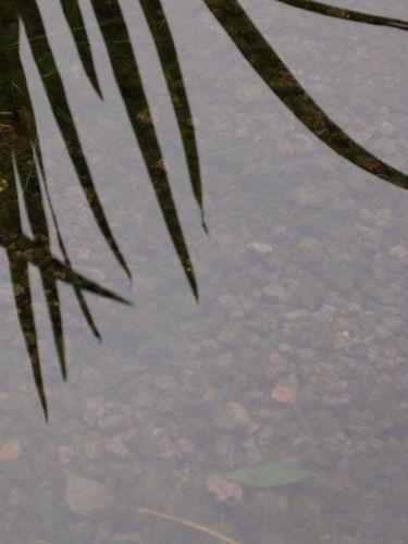 Lavamulch 8 - 16 im Schwimmteich verwendet
