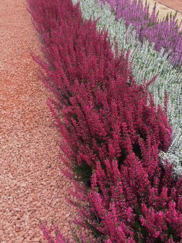 Rosso Verona Splitt Ziergarten mit Blumen verlegt