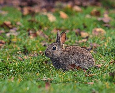 Ein tierfreundlicher Garten Hase