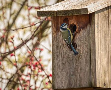 Ein tierfreundlicher Garten Vogelhause